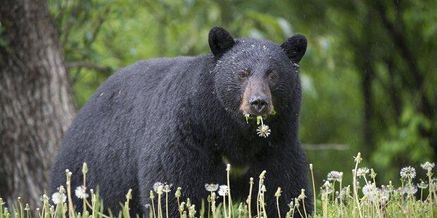 Teenager wacht im Maul eines Bären auf