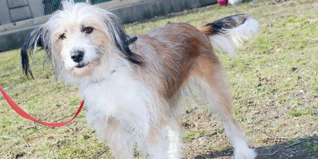 Jagd auf Hunde empört Tierfreunde