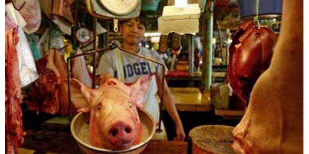 FPÖ fordert Schweinefleisch-Importstopp