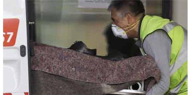 Erster Schweinegrippe-Toter in England