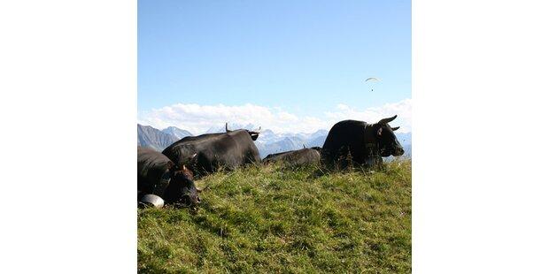 Die beliebtesten Ziele der Österreicher