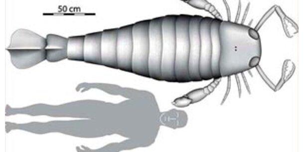 Riesen-Skorpion in Deutschland entdeckt