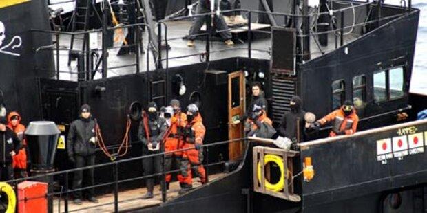 Tierschützer beenden Jagd auf Walfänger
