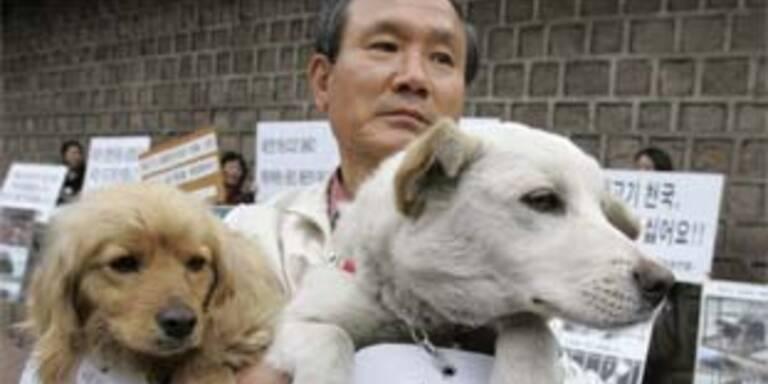 Tierschützer protestieren gegen die Pläne, Hundeverzehr zu legalisieren.