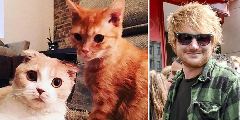 Mega-Hype um Ed Sheerans Katzen