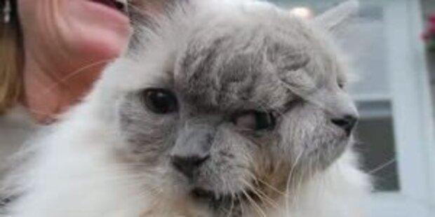 Rekord von Katze mit zwei Gesichtern