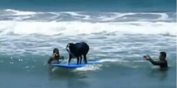 Hundesurfweltcup in Kalifornien
