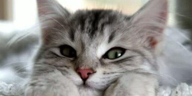 So macht Katzenschnurren gesund