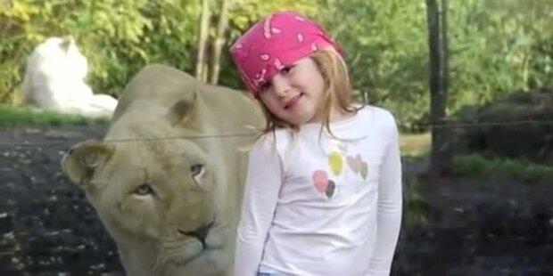 Löwe erschreckt kleines Mädchen