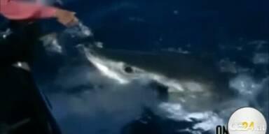 Weißer Hai frisst Unterwasserexpertin aus Hand