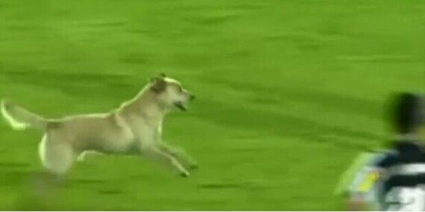 Hund unterbricht Fussballspiel