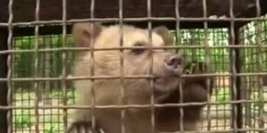Brutale Tierquäler entführen Baby-Bär