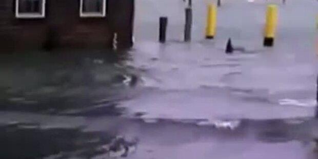 Hai auf den Straßen von New Jersey gesichtet