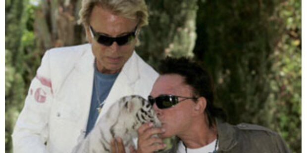 Siegfried&Roy: Fünf neue Tigerbabys