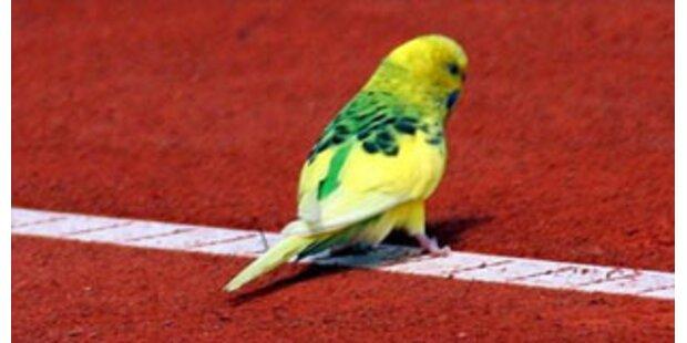 Deutscher hielt 1.500 Vögel auf 63 Quadratmetern