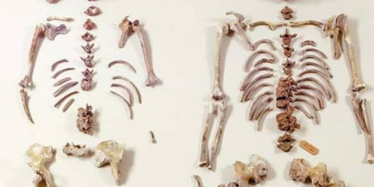 Knochenfund: Es waren junge Teenies