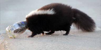 skunk_