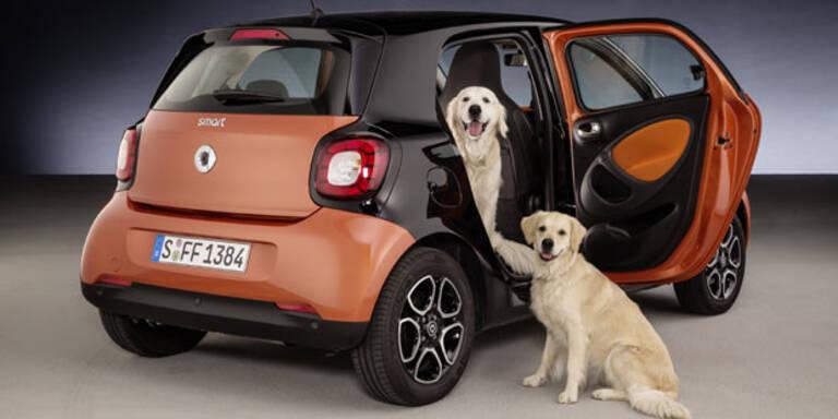 Trick macht Smart Hunde-tauglich