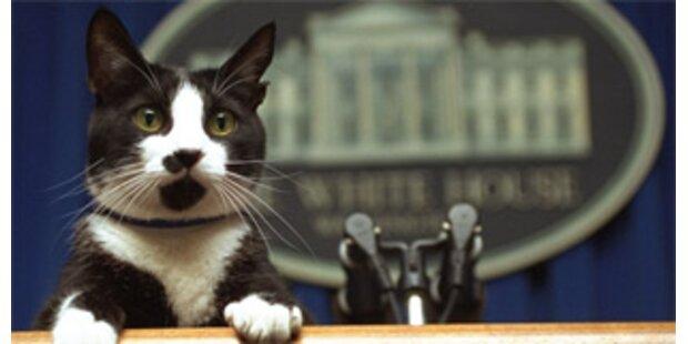 Ehemalige Präsidentenkatze Socks gestorben