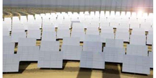 Forscher bauten Solarkraftwerke der Pflanzen nach