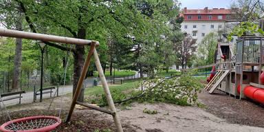 Alle Fotos: Sturm hinterließ Spur der Verwüstung
