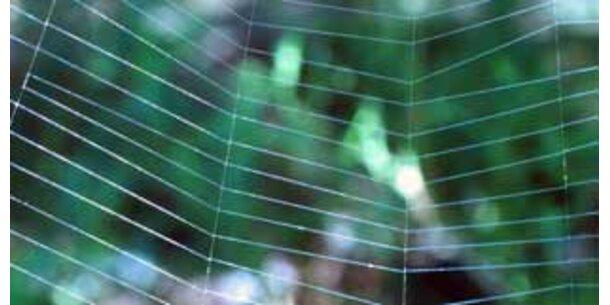 180-Meter-Spinnennetz in Texas entdeckt
