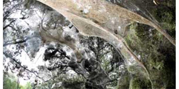 200-Meter-Spinnennetz in Texas