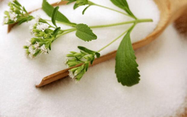Zucker kämpft gegen Stevia an