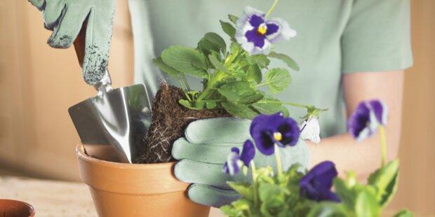 Frühlingspflanzen mit großer Verspätung