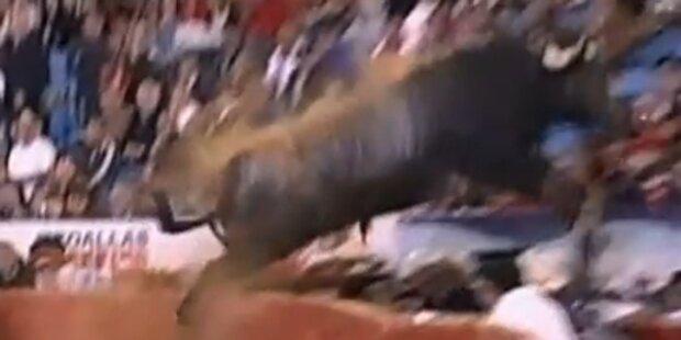 500 Kilo-Stier springt in Zuschauermenge