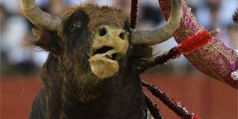 Stier in Mexiko in Haft