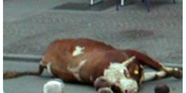 Polizei erschießt flüchtigen Stier