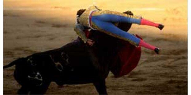 Stierkämpfer in Spanien schwer verletzt