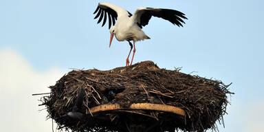 Zugvögel kehren zurück