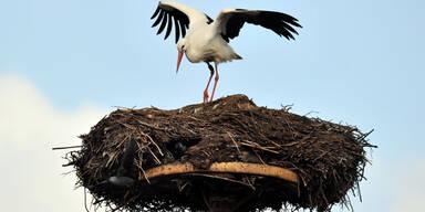 Der erste Storch ist gelandet