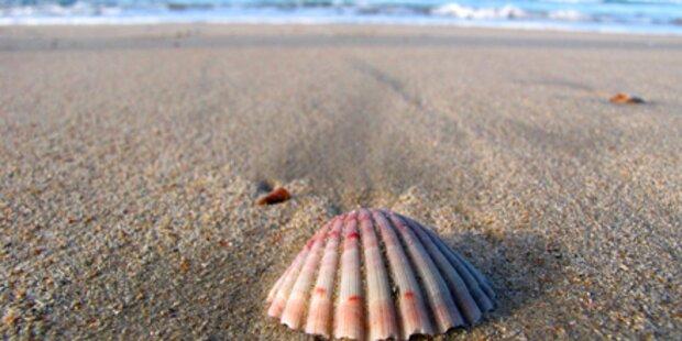 Meeres-Schätze für unsere Haut