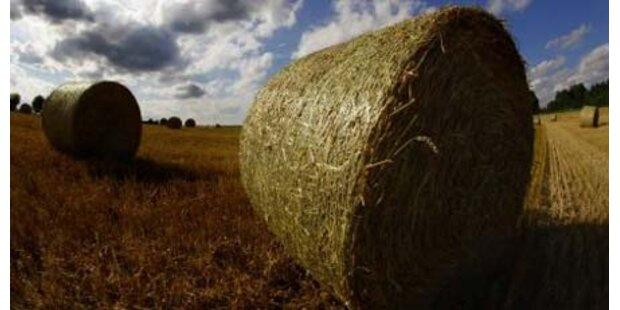 Landwirt fast von Strohballen erdrückt