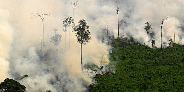 Dichter Smog durch Waldbrände