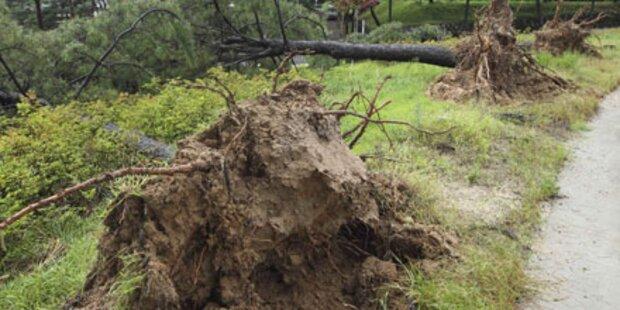 Dutzende Tote: Taifun verwüstet Nordkorea