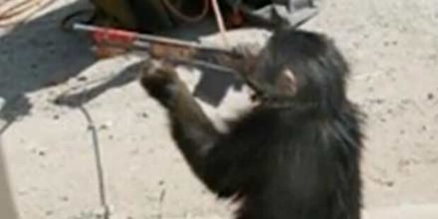 Taliban bilden Affen zu Soldaten aus