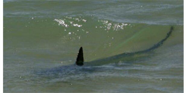 Suche nach Hai an spanischer Küste beendet
