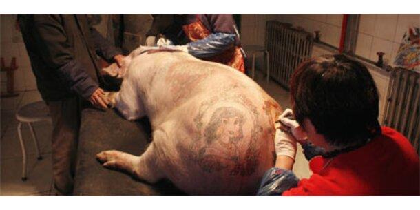 Belgier tätowiert Schweine in China