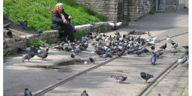 Geldstrafe für unerlaubtes Taubenfüttern