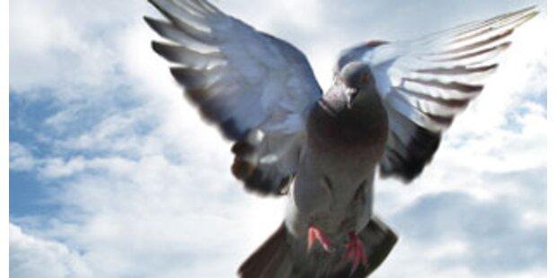 Strafe für Taubenfüttern am Markusplatz