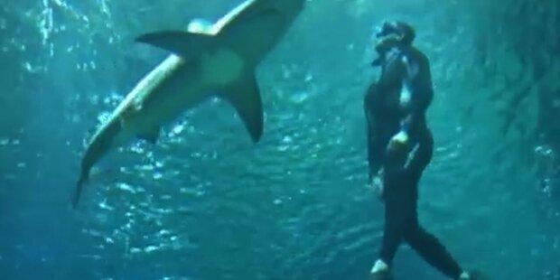 Taucher 45 Minuten mit Haien im Becken