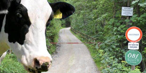 Rinder-TBC: Sechs Vorarlberger Höfe gesperrt