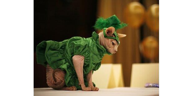 Katzen als Showgirls: Kunst oder Tierquälerei?