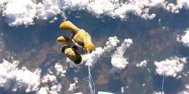 Teddy-Bär schlägt All-Felix
