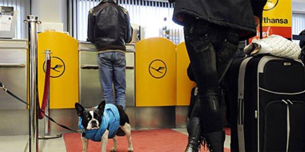 Terror-Alarm am Flughafen Berlin
