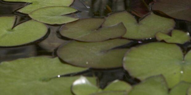 Mysteriöse Substanz in Teich fängt Feuer